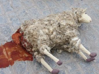sheep birth